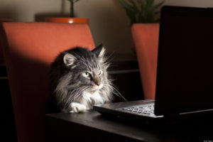 chat devant écran pc