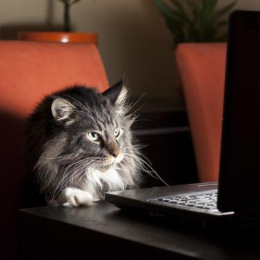 14 règles pour créer une page web qui donne envie de lire