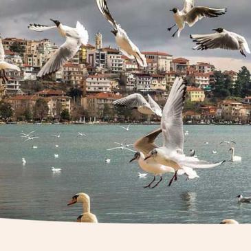 Tutoriel : Comment créer un effet de vague sur une image bannière avec Inkscape