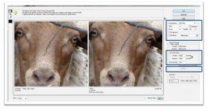 photo mouton-photoshop-1